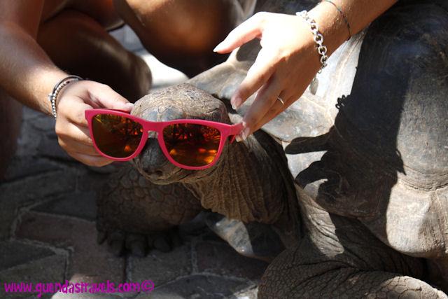 zanzibar_prisonisland_turtle_sunglasses