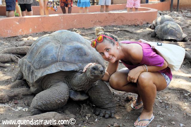 zanzibar_prisonisland_turtles