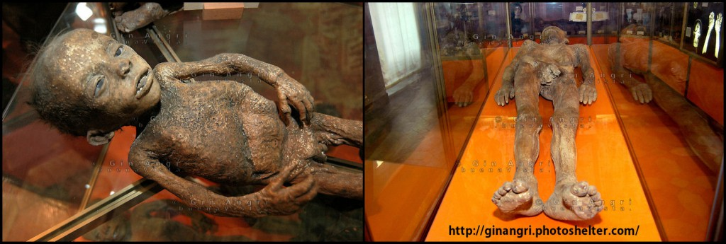 museogorini2