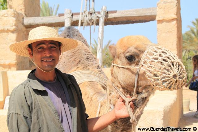 djerba explore cammello