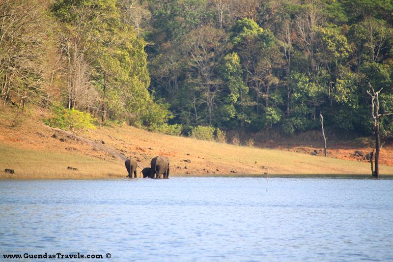 cosa vedere in kerala elefanti
