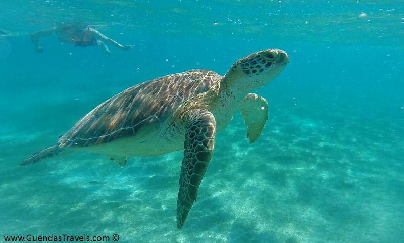 itinerario di 20 giorni in Messico Akumal tartarughe