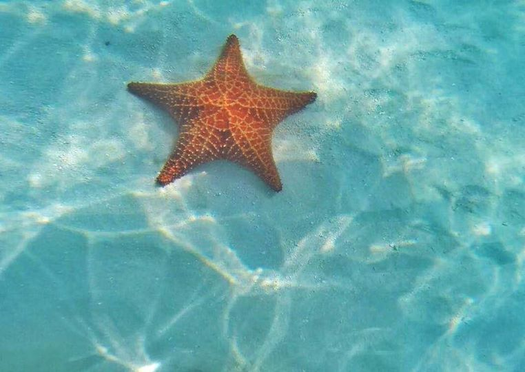 isla saona stella marina gigante