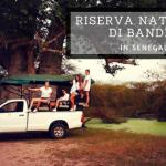 La Riserva di Bandia in Senegal: prima riserva naturale privata
